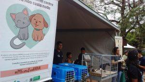 Os cães e gatos são oferecidos em três feiras de campo Grande